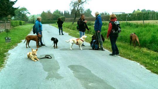 1. Mai-Wanderung mit Hundefreunden