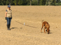 15. Lipperose Fährtenhund-Pokal